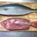 ふるさと納税 高知県大月町 鮮魚各種 届きました